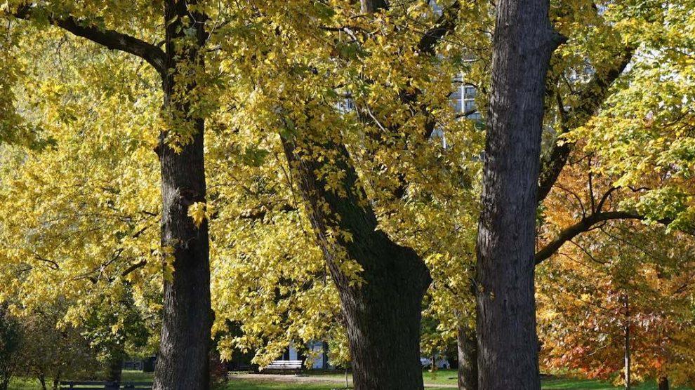 La metafora dell'albero
